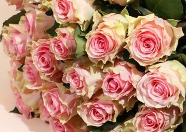 Букет из 25 кремово-розовых Роз