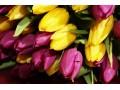 Классический букет из 25 Тюльпанов