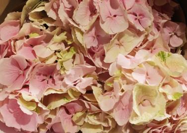 Букет из 3-х Розовых Гортензий