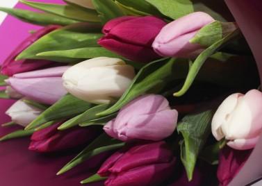 Букет из 15 тюльпанов Микс
